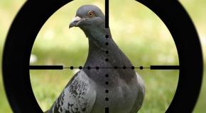 Foires et salons « Nous ne sommes pas des pigeons ! »