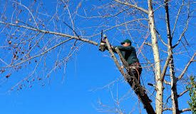 Faire couper les branches qui dépassent : c'est toujours possible