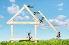 Fourmis, guêpes, araignées… comment les chasser de la maison?