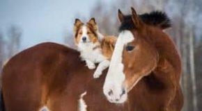 Les propriétaires des chiens non tenus en laisse qui ont causé l'emballement d'un cheval et la chute de la cavalière doivent indemniser la victime. Et ce, même si les deux canidés ne se sont pas approchés à moins de dix mètres.