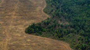 Zéro déforestation